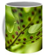 Laua'e Fern Coffee Mug