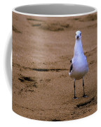 Laughing Gull 004 Coffee Mug