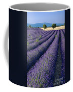 Lavender Fields Coffee Mug