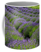 Lavender Rows Coffee Mug