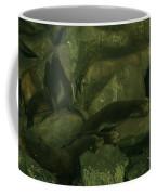 Lazy Sea Lions Coffee Mug
