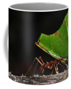 Leafcutter Ant Coffee Mug