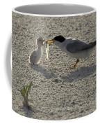 Least Tern Feeding It's Young Coffee Mug