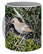 Lecontes Thrasher In Bush Coffee Mug