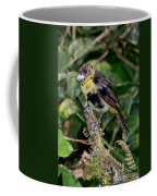 Lemon-rumped Tanager Molting Coffee Mug