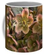 Lenten Roses Coffee Mug