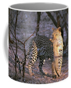 Leopard With African Wild Cat Kill Coffee Mug