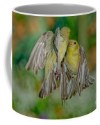 Lesser Goldfinch Females Fighting Coffee Mug