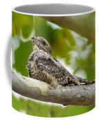 Lesser Nighthawk On Branch Coffee Mug