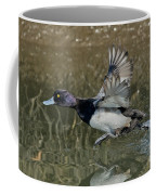 Lesser Scaup Drake Coffee Mug