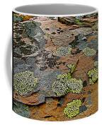 Lichens Along Trail To Plain Of Six Glaciers In Banff National Park-alberta-canada Coffee Mug
