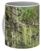 Lichens On Tree Branches In The Scottish Highlands Coffee Mug