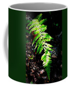 Light Play On Fern Coffee Mug