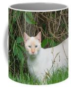 Lilac Point Siamese Cat Coffee Mug