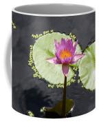 Lilly Lake Coffee Mug