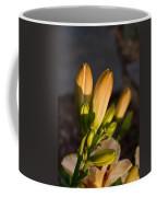 Lily Blossoms At Sunset Coffee Mug