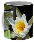 Lilypad Coffee Mug
