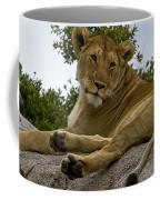 Lion   #1646 Coffee Mug