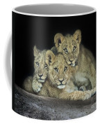 Three Lion Cubs Coffee Mug