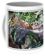 Lion Resting Coffee Mug