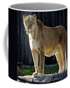 Lioness Coffee Mug by Frozen in Time Fine Art Photography