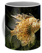 Lionfish Searching For Its Prey Coffee Mug