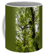 Little Bear Cub In Tree Cades Cove 2 Coffee Mug