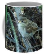 Little Bird Waiting Coffee Mug