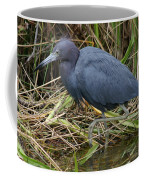Little Blue Heron Hunting Coffee Mug