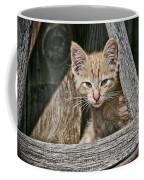 Little Charlie - Kitten By Wagon Wheel - Casper Wyoming Coffee Mug