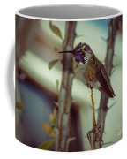 Little Costa's Hummingbird Coffee Mug