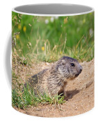 Little Marmot Coffee Mug