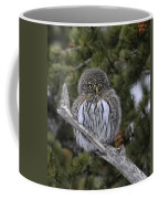 Little One - Northern Pygmy Owl Coffee Mug