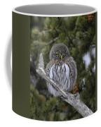 Little One - Northern Pygmy Owl Coffee Mug