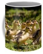 Yellow Muscovy Duck Ducklings Running Fast  Coffee Mug
