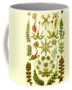 Liverworts Moss Brunnenlebermoos Haeckel Hepaticae Coffee Mug