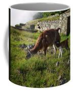 Llama Ya Mama Coffee Mug