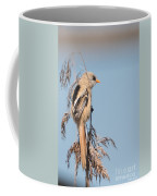 ln06 Bearded Reedling Juvenile Coffee Mug