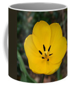 Lone Yellow Tulip Coffee Mug