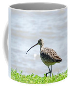 Long Billed Curlew  Coffee Mug