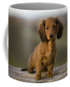 Long-haired Dachshund Puppy Coffee Mug