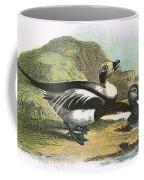 Long Tailed Duck Coffee Mug