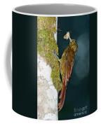 Long-tailed Woodcreeper Coffee Mug