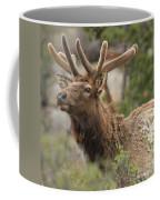 Looking Proud Coffee Mug