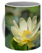 Lotus Blooming  Coffee Mug
