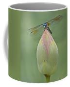 Lotus Bud And Dragonfly Coffee Mug