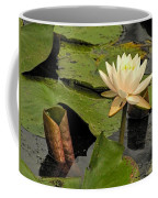 Lotus Flower In White Coffee Mug