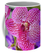 Orchid Lovely In Pink And White Coffee Mug