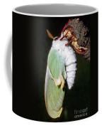 Luna Moth Actias Luna Newly Hatched Coffee Mug