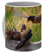 Lunch Is Served To The Fourth Baby Barn Swallow Coffee Mug